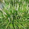 麦冬甲基黄烷酮A,B植物标准品订货说明