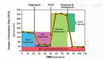 代谢组学技术服务Seahorse XFe细胞能量分析